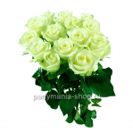 Роза «Лимбо»