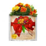 Растущая трава «Бархатцы» в подарочном пакете