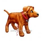 «Собака золотистая»  фигурный шар с гелием